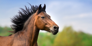 The Importance of Fats in Horse Nutrition