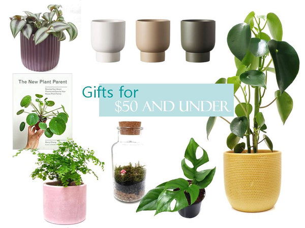 Gifts for under $50