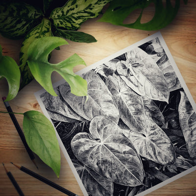 Still Life Plant Illustration with Brian Cheung - plantsmith