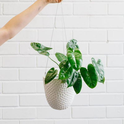 Angus & Celeste Matte Embossed hanging planter - plantsmith