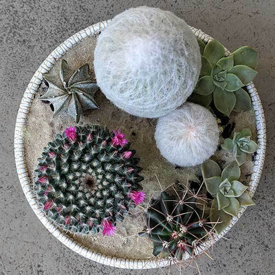 Cactus Bouquet Planter Bowl - plantsmith