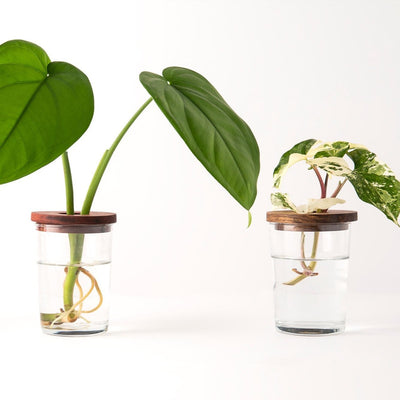 Willow Woods Creative propagation vessels - plantsmith