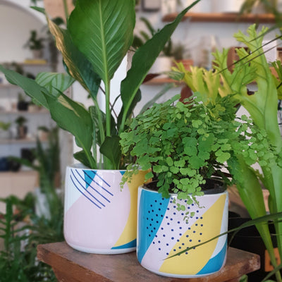 Memphis planter - plantsmith