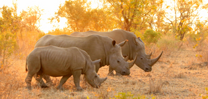 Support #WorldRhinoDay on September 22