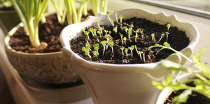 Tips for starting your own indoor garden