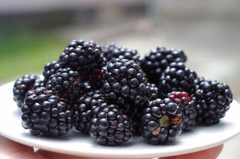 Black Berries 125gm - Netherland