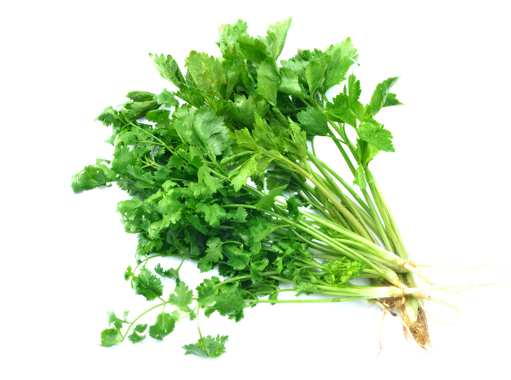 Coriander 100gm Bundle