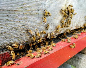 I Want to be a Beekeeper