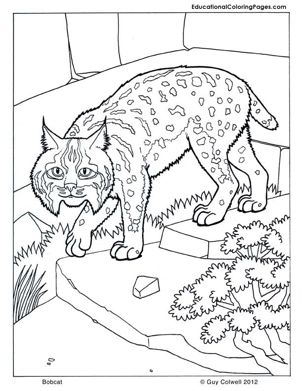 Mammals Coloring Book 1 2 3 & 4 - Fashionura