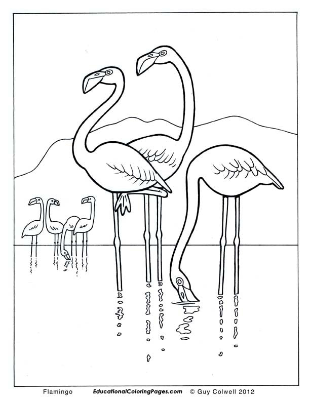 Birds Coloring Book 1 & 2 - Fashionura