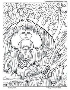 In The Trees Coloring Book 1, 2 & 3 - Fashionura