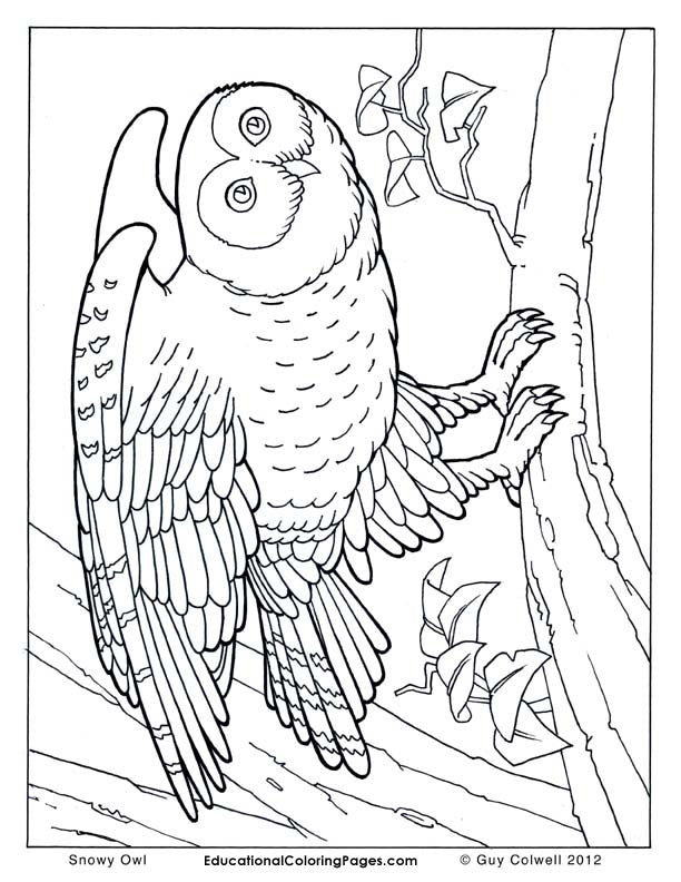 Birds Coloring Book 2 - Fashionura
