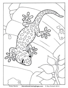 Crawly Creepers Coloring Book 1 - Fashionura