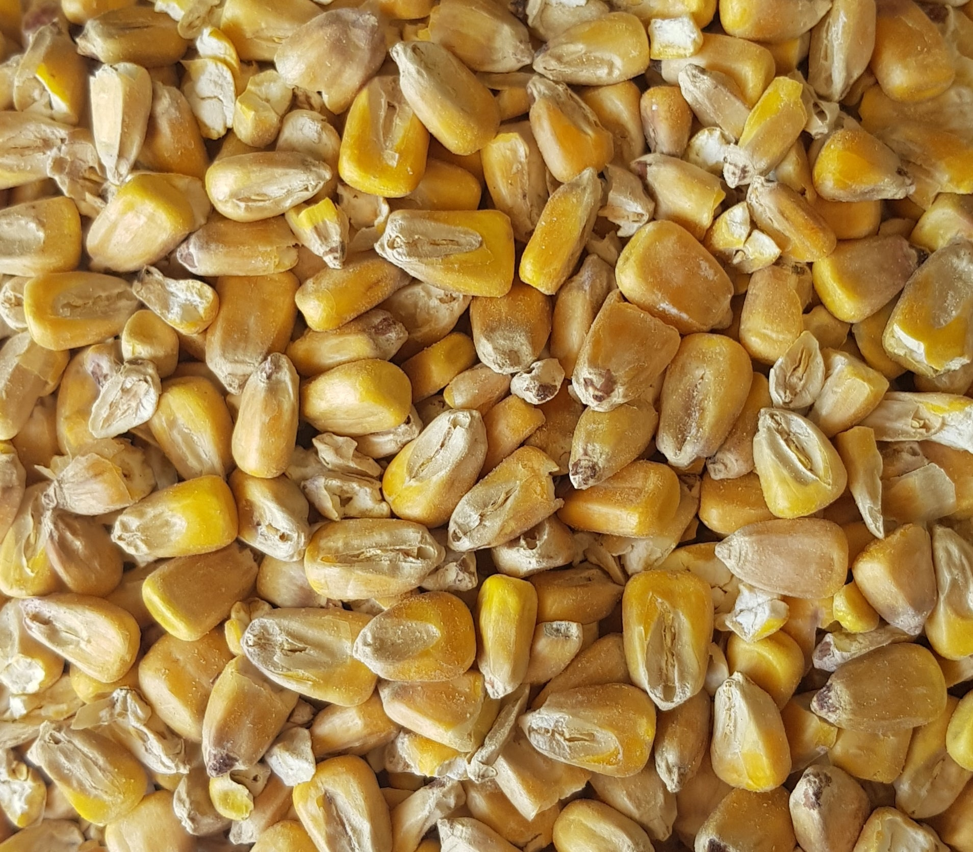 Gladfield Maize Malt