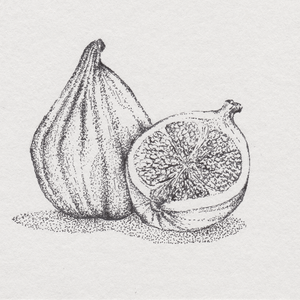 Hand-Drawn Fig Illustration Print