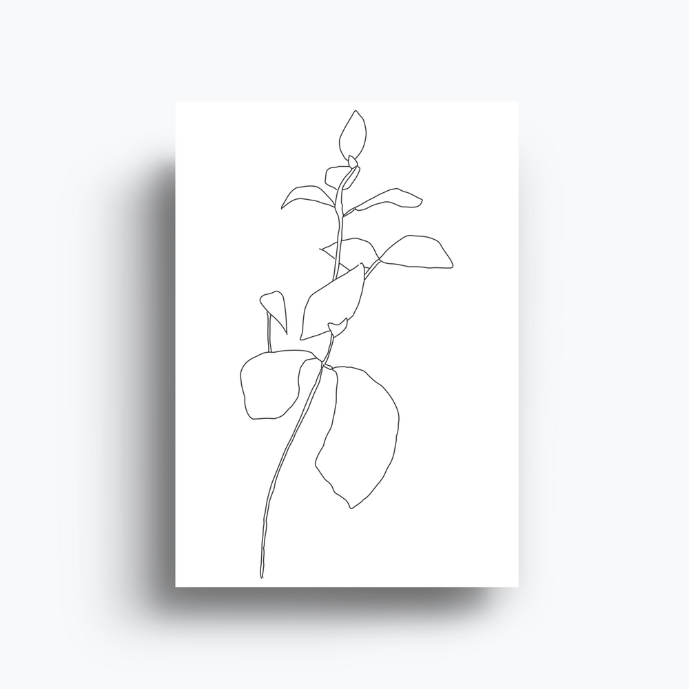 James Wilson Succulent Line Drawing Print A4
