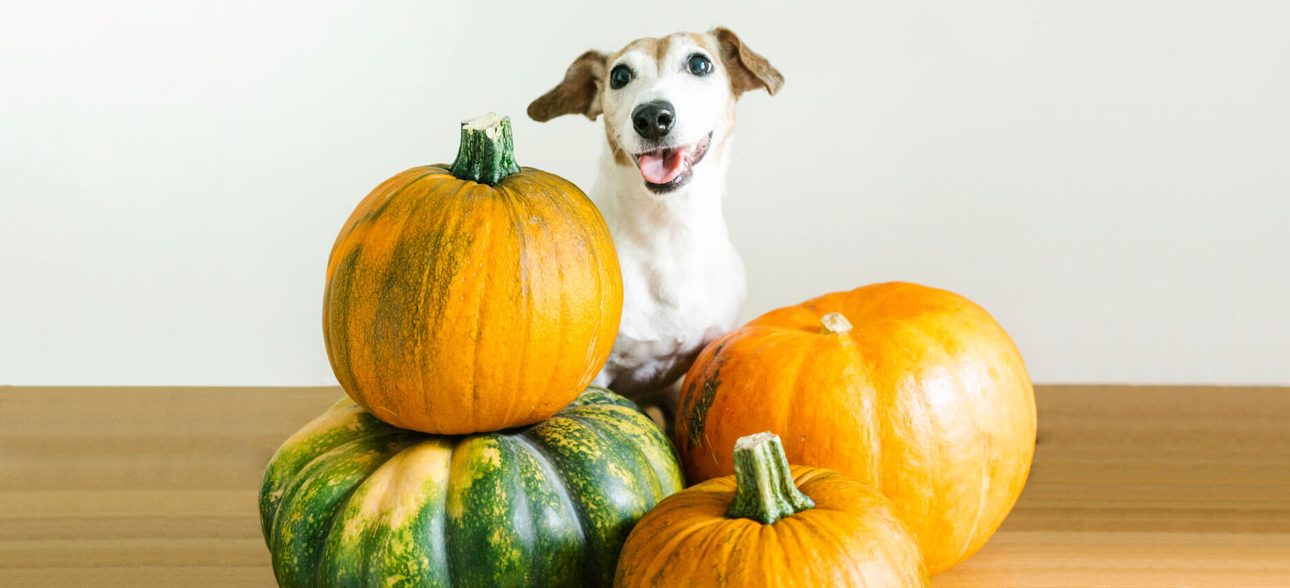 how much pumpkin to give a dog