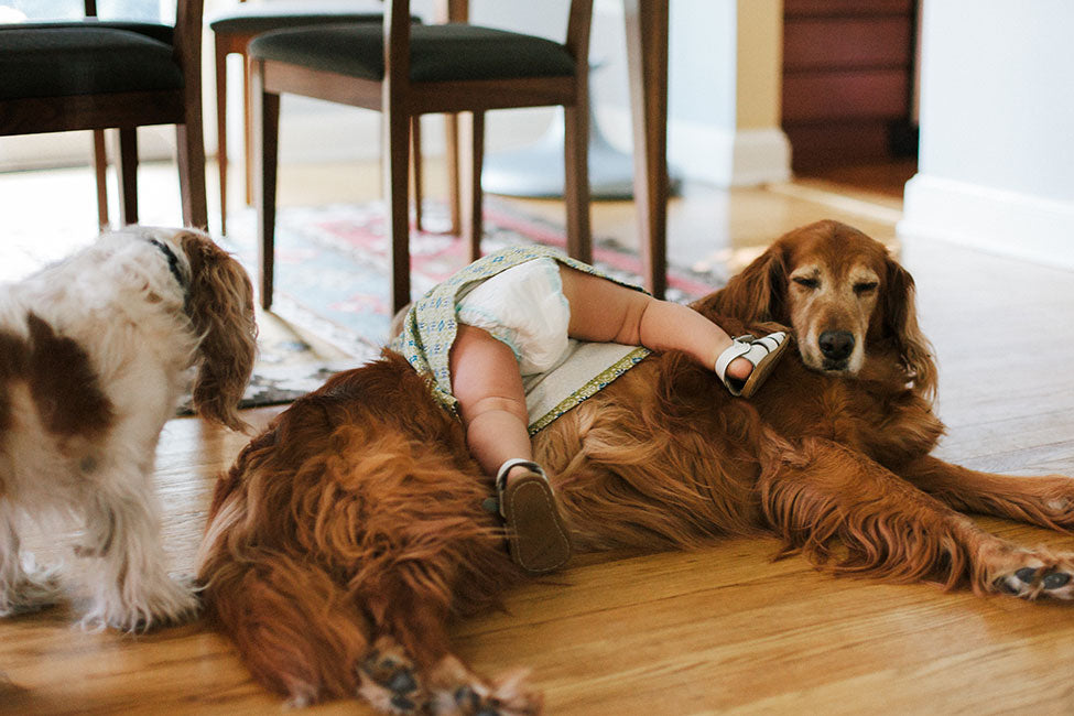 How dogs help reduce allergies in kids