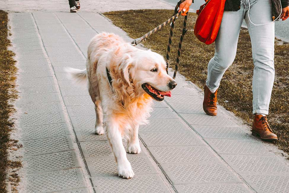 Walk your dog to help calm anxiety before a trip