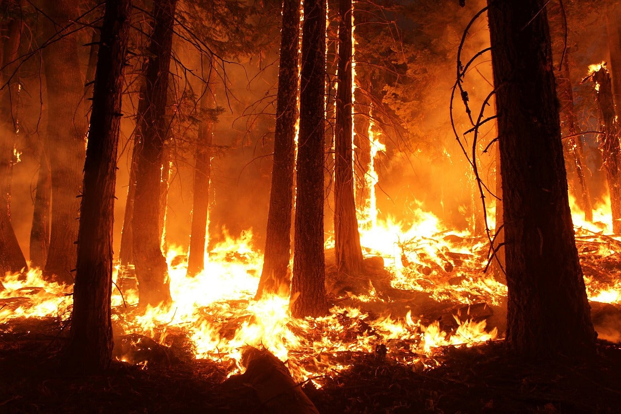 Wildfires: Causes, Impacts and Prevention