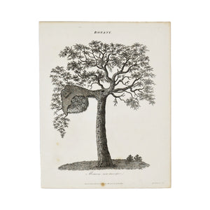 "Botany (Mimosa)  Antique 1820 Engraving from ""The Modern Encyclopedia: The Latest Discoveries in each Department of Knowledge.""  1820s etching depicting a Mimosa tree.  Measures 10.5 x 8.25 inches."
