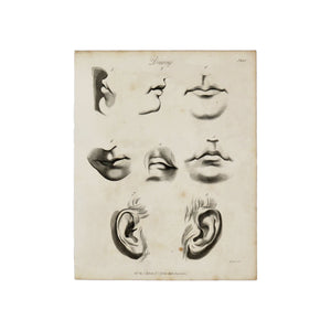 "Drawing Plate 3 Antique 1820 Engraving from ""The Modern Encyclopedia: The Latest Discoveries in each Department of Knowledge."" 1820s etching of mouths and ears for drawing purposes Measures 10.5 x 8.25 inches"