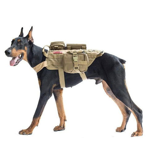 A Must-have Dog Backpack for Training & Hiking - Kitty Puppies