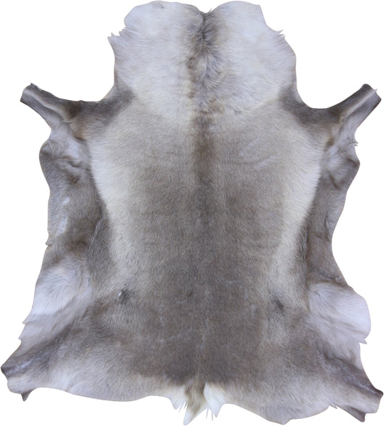 Premium Reindeer Hide- Medium (115cm x 75cm)