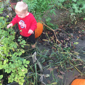 Pumpkin Pickin' at the Beauty Barn
