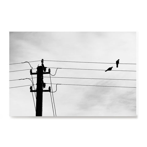 Ezposterprints - Birds On Wires