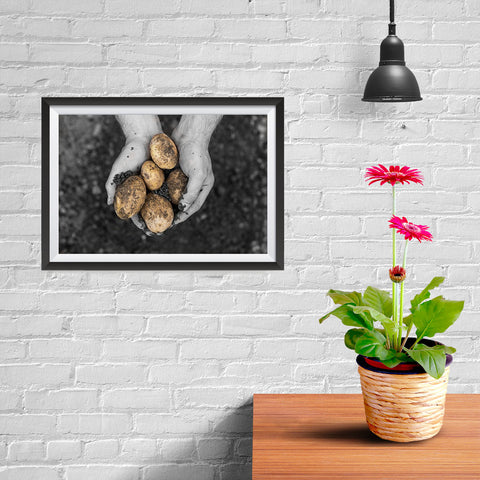 Ezposterprints - Freshly Dug Potatoes - 12x08 ambiance display photo sample