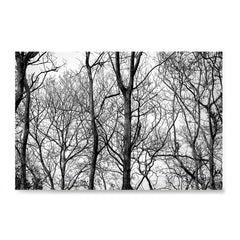 Ezposterprints - Leafless Trees