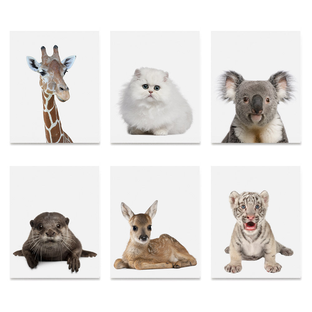 High quality Adorable Portraits 1, Baby Animal Series poster prints
