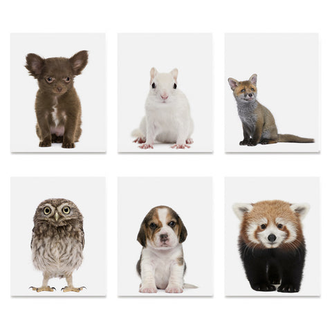 High quality Adorable Portraits 2, Baby Animal Series poster prints