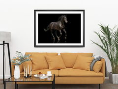 Elegant Black, Elegant Black White Red Sport Horses ambiance display photo sample