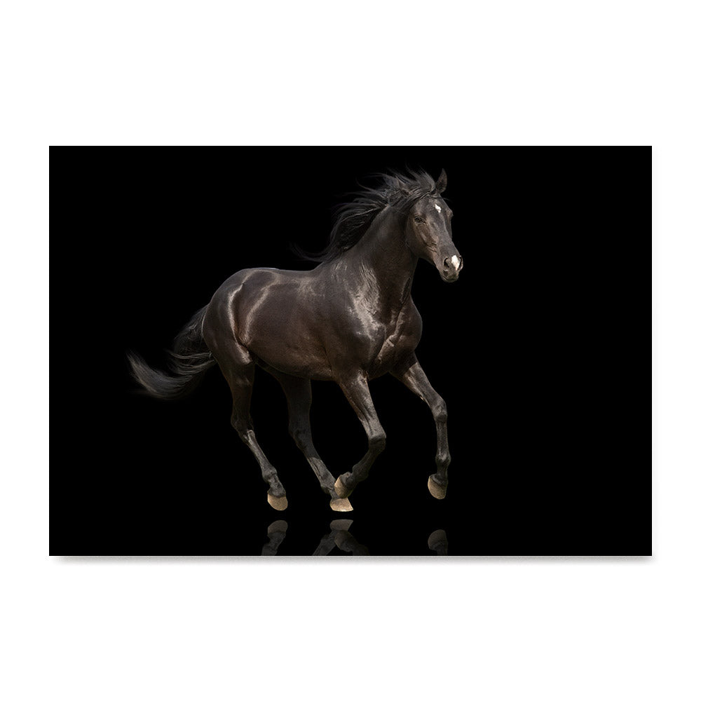 High quality Elegant Black, Elegant Black White Red Sport Horses poster prints