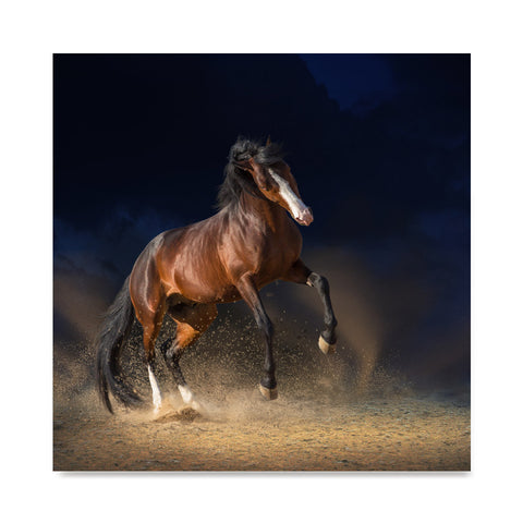 High quality Galloping on Sand, Elegant Black White Red Sport Horses poster prints