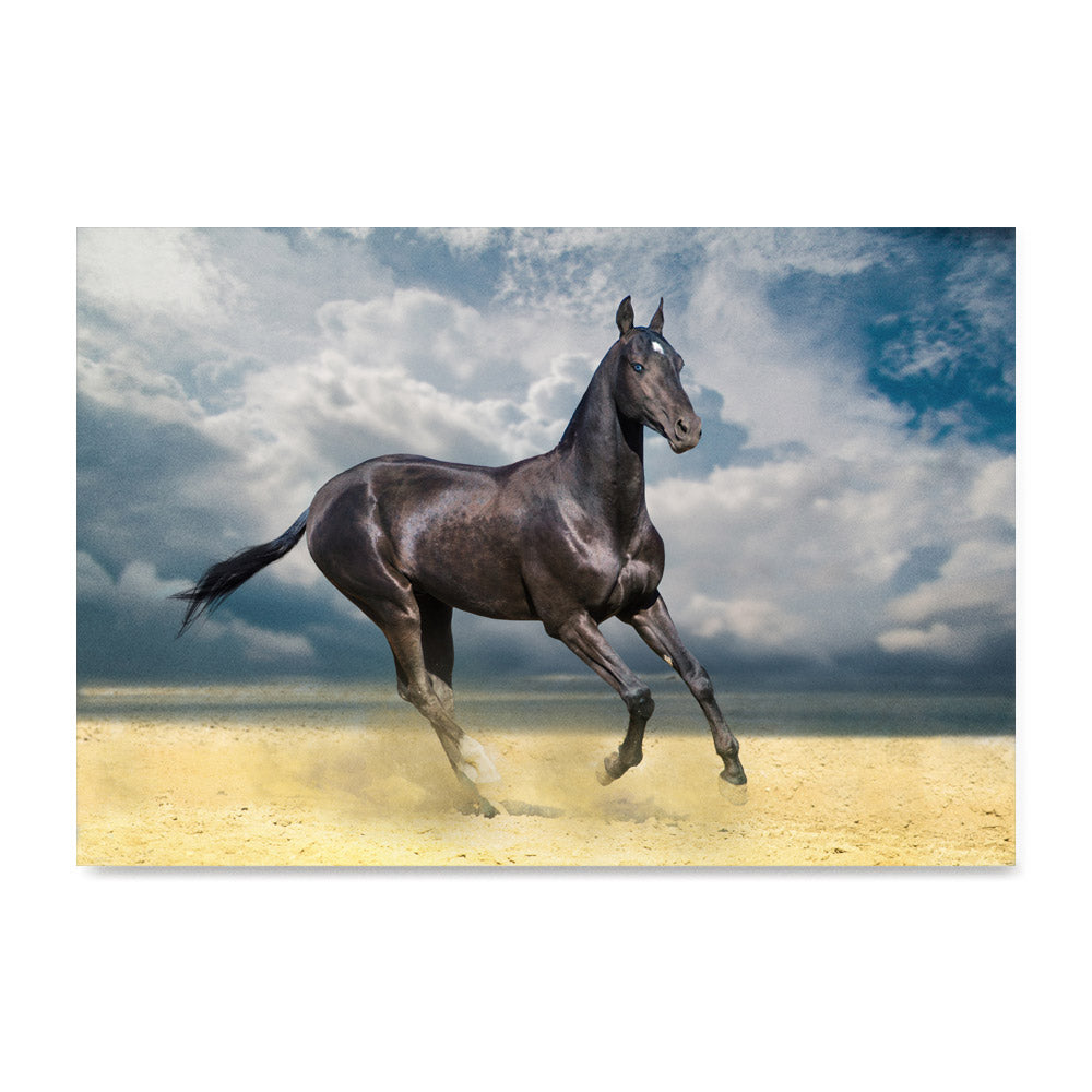 High quality Horse On Sand, Elegant Black White Red Sport Horses poster prints