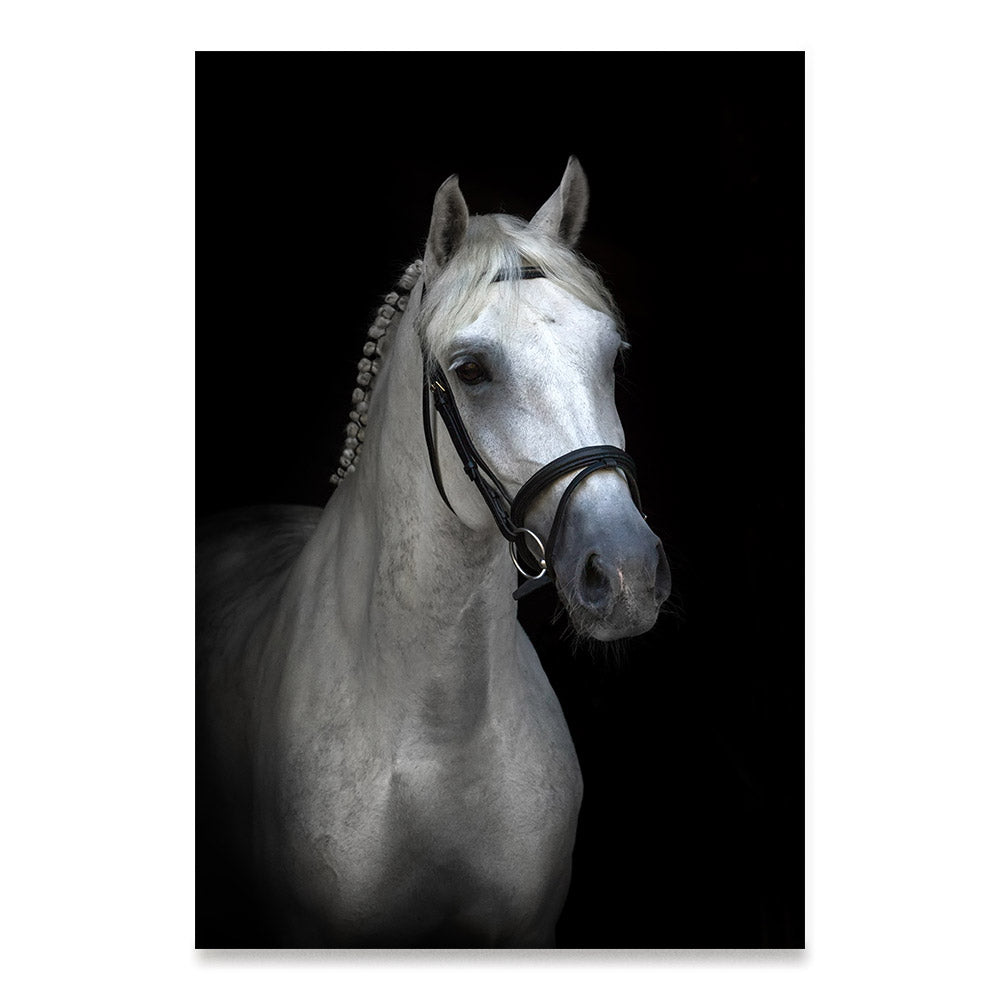 High quality Portrait, Elegant Black White Red Sport Horses poster prints