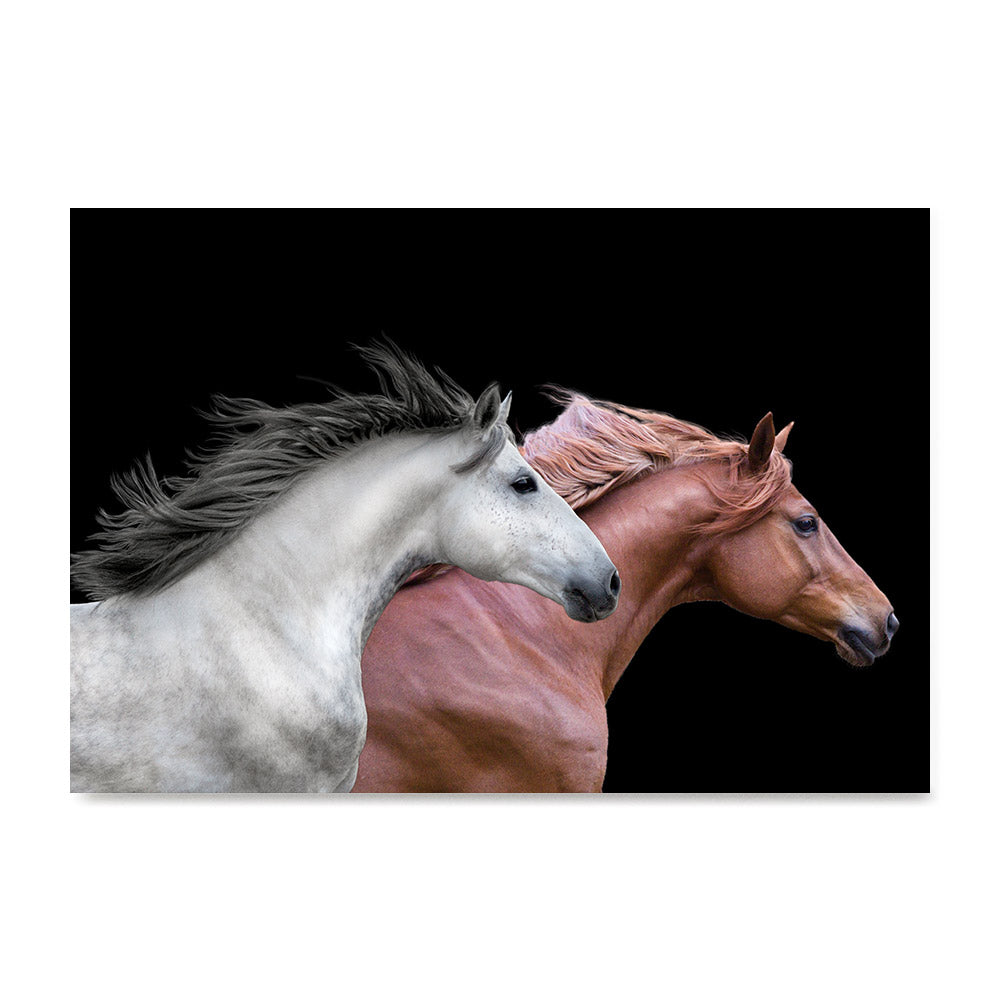 High quality Red and White, Elegant Black White Red Sport Horses poster prints