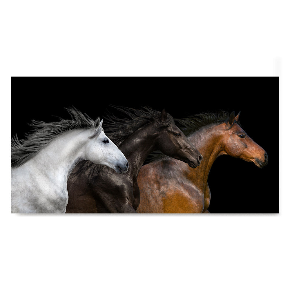 High quality White, Black and Red, Elegant Black White Red Sport Horses poster prints
