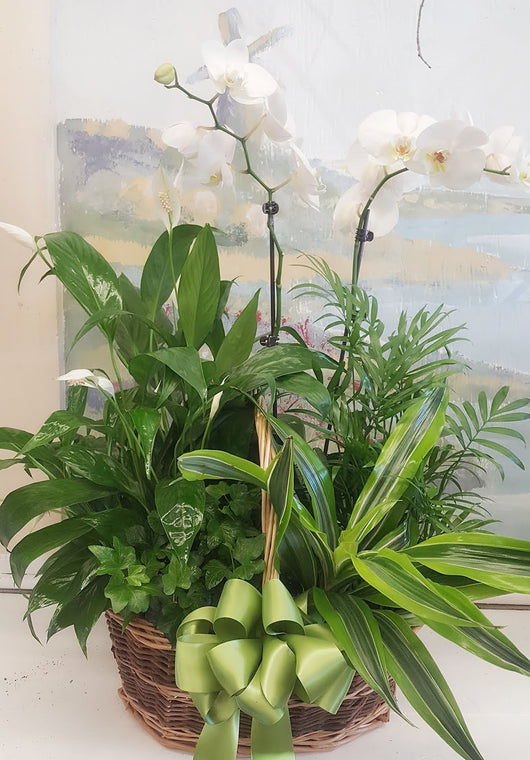 2  Stems Luxury Orchid Dish Garden