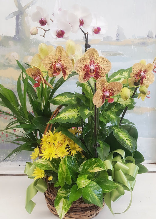4 Stem Orange Orchid  Dish Garden