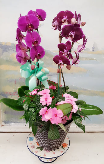 2018 New Product Orchid Dish Garden Arrangement