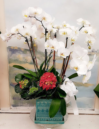 2019 White Orchid Luxury Plant (6 Stem)