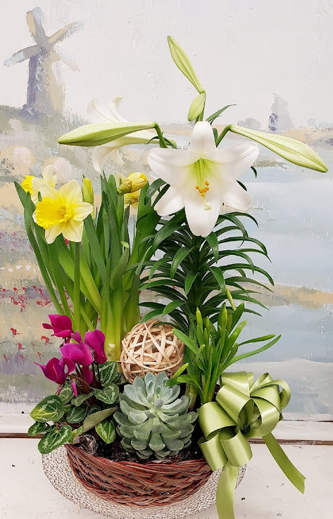 2019 Easter Lily Dish Garden