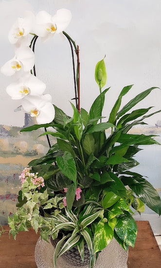 2020 Fall Season Orchid Dish Garden