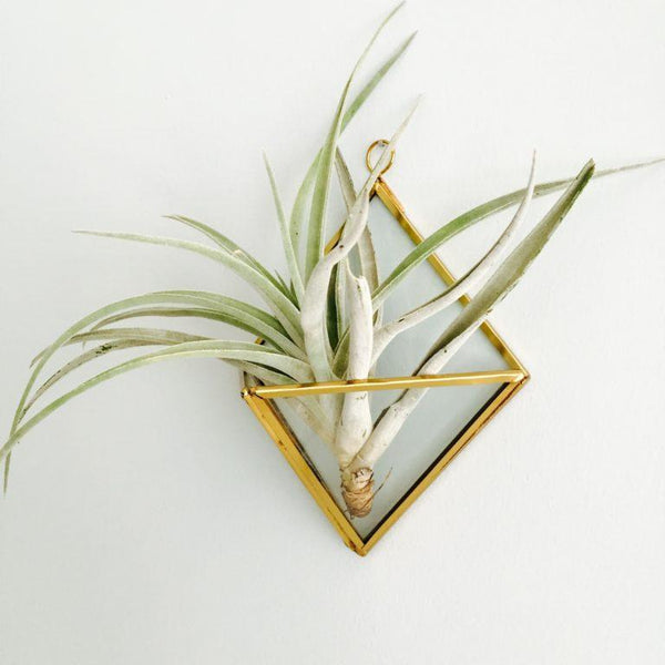 Indoor Air Plant Care 1.0
