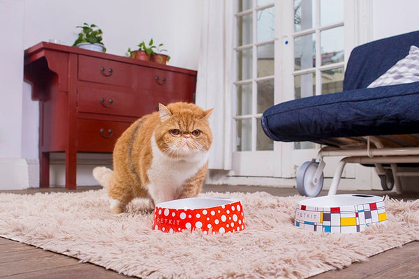The PetKit - The World's #1 SmartBowl