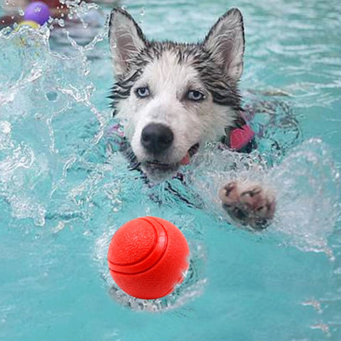 Pool Chew Toy